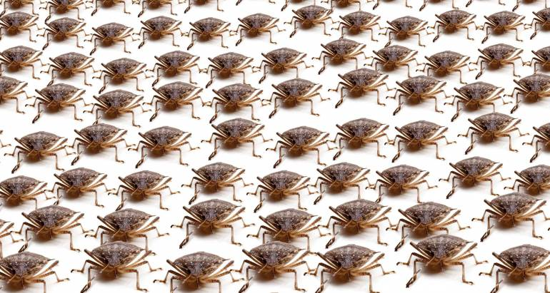 How To Keep Stink Bugs Out of Your Home in Loganville & Monroe Georgia