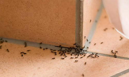 ants-in-office