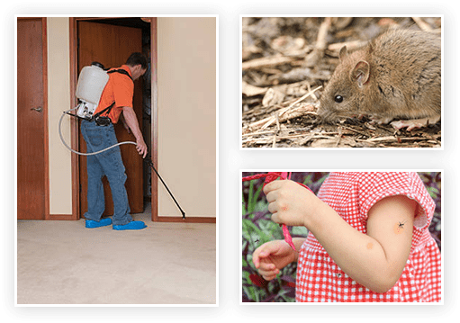 residential-pest-service